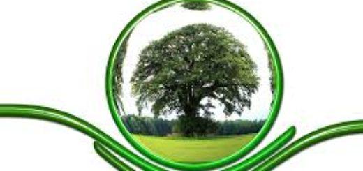 АНО Центр экологических экспертиз
