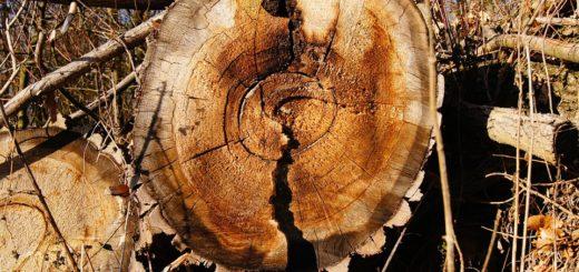 Годно ли технологическое сырье – древесная щеп неосмоленная, которое находилось на технологической линии