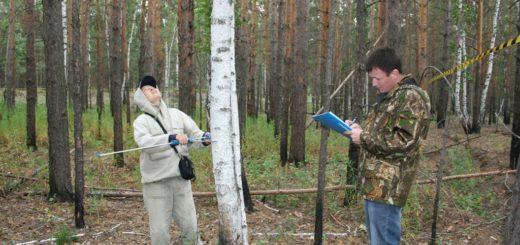 Оценка лесного участка
