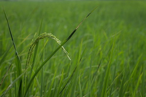 Экспертиза по оспариванию кадастровой стоимости: суть
